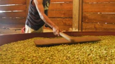 La cardamome est séchée dans de grandes cuves avant d'être distillée