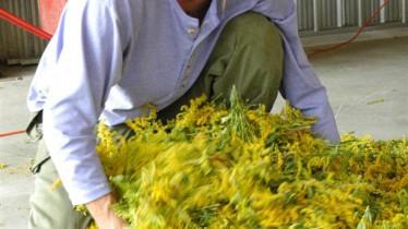 Etalement des fleurs pour les laisser reposer