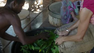 Distillation de feuilles de cannelle : remplissage de l'alambic