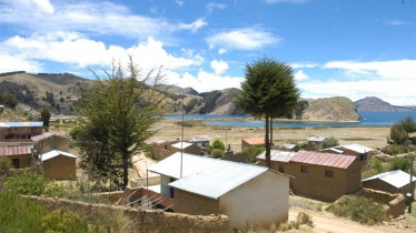Plantations de romarin aux abords du lac Titicaca (Copacabana)