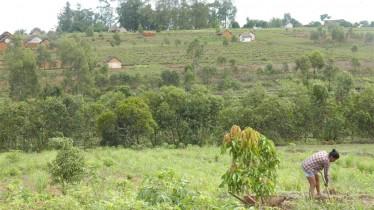 Vue d'ensemble des plantations
